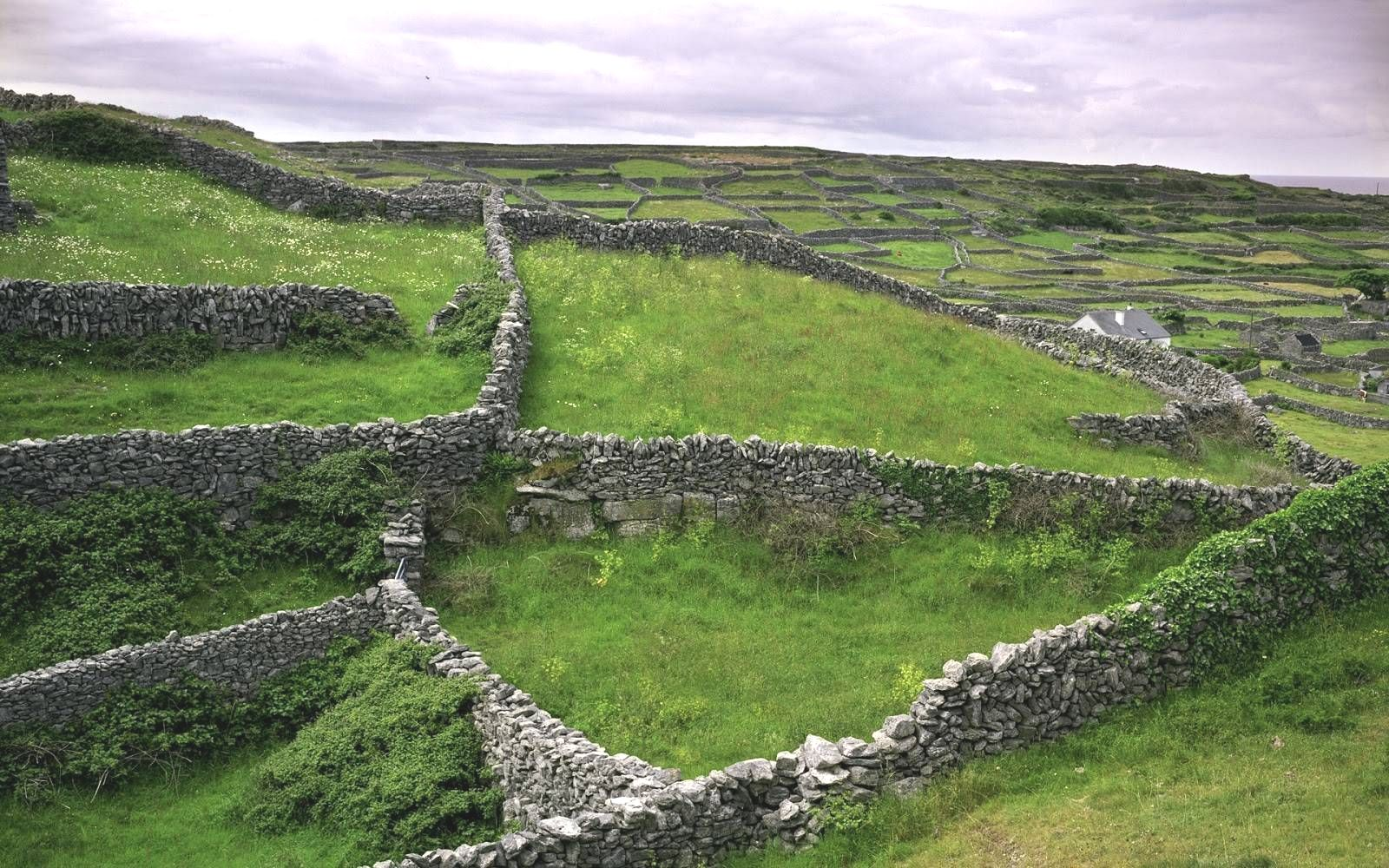 Stone Built Farm Fences in Eire